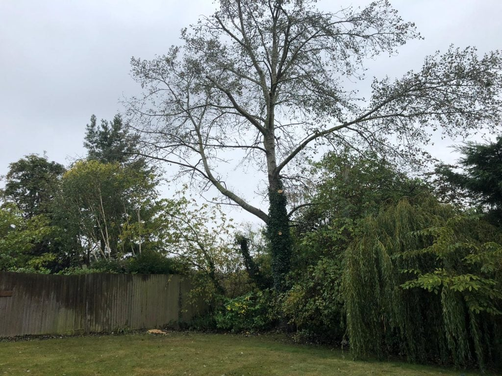 Before image of tree cutting project