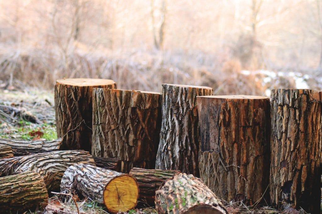 Felled trees in Chelmsford Essex