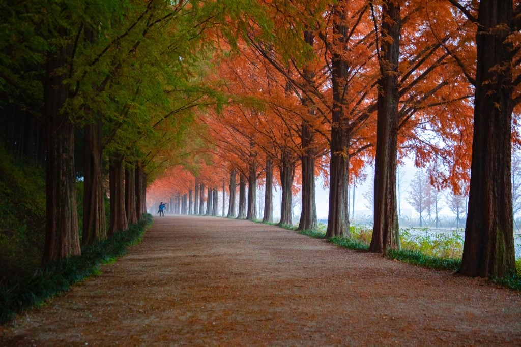 Stunning trees in forest during Autumn months