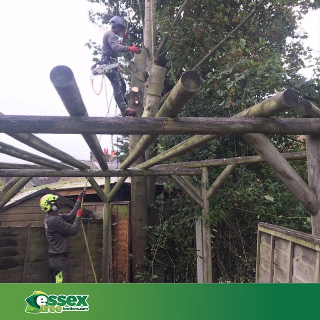 Essex tree brothers performing tree work in essex